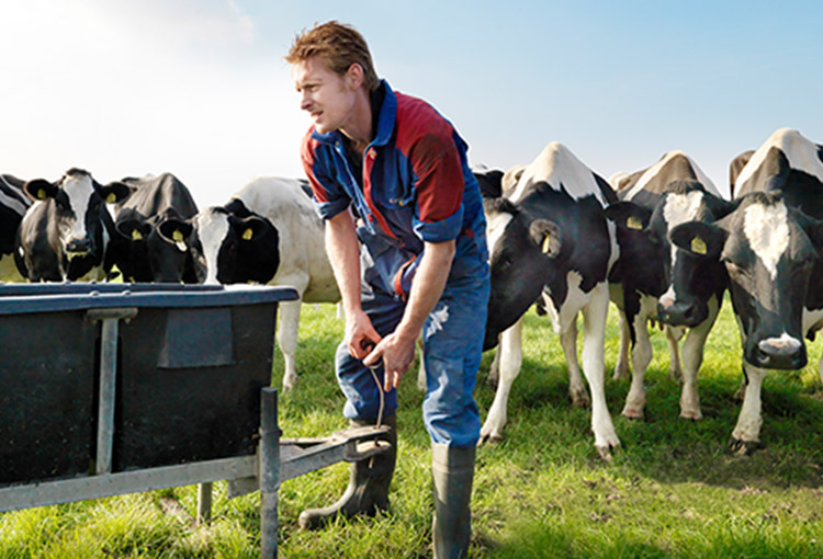 dairy farmer outside